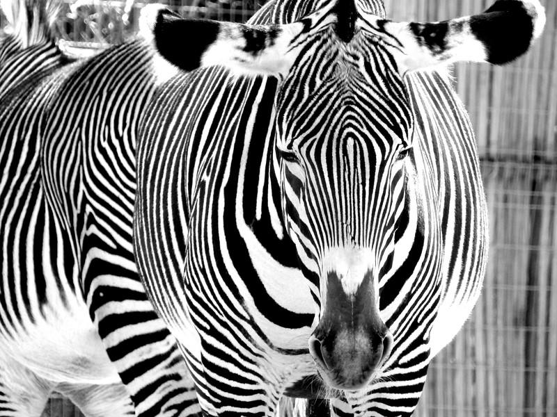 Denver Zoo 2018 (3097).JPG