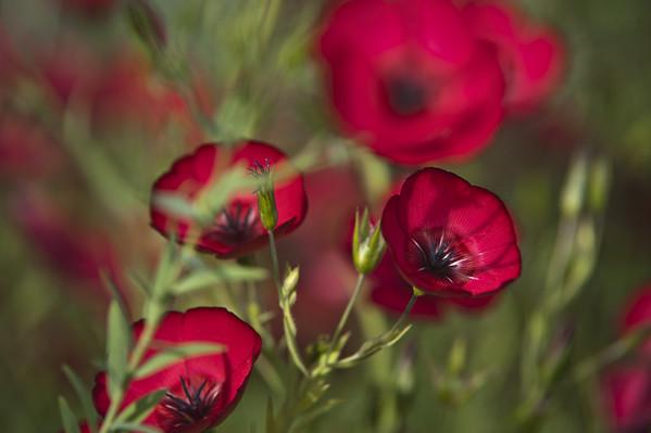 Les fleurs d'Agnès