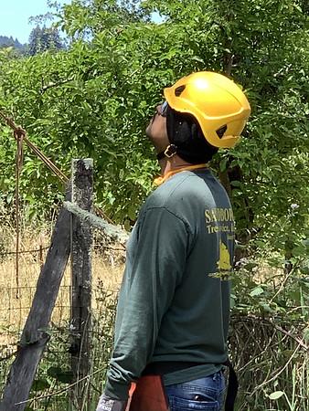 Live Oak Tree project