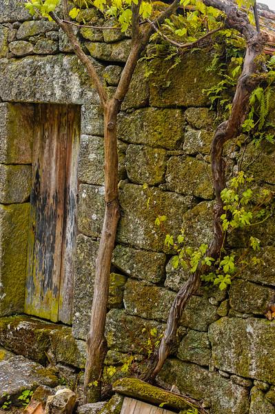 Vouzela-PR2 - Um Olhar sobre o Mundo Rural - 17-05-2008 - 7433.jpg