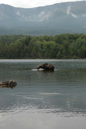 Katahdin - Baxter SP Maine 2008