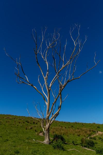 Im Waitawa Regional Park