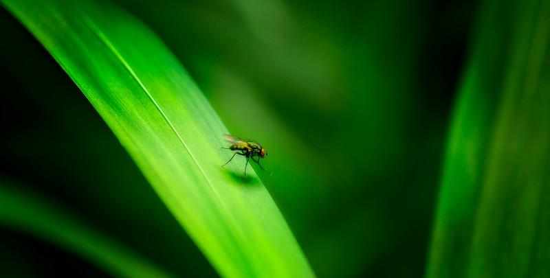 Bugs and Beetles - 13.jpg