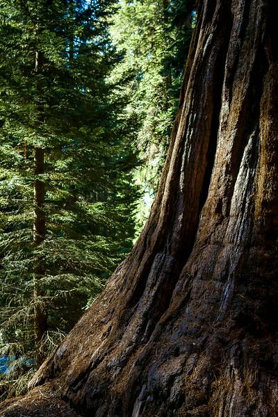 20140217-sequoia-002.JPG