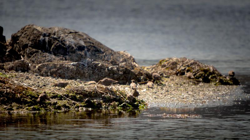 birds on seaweed.jpg