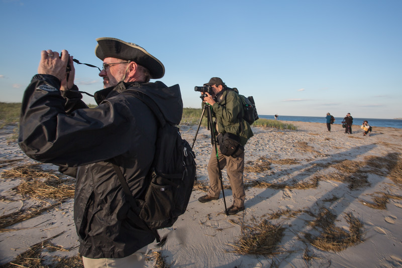 20141009-3Y9A4052 Sandy Neck Field Study_.jpg