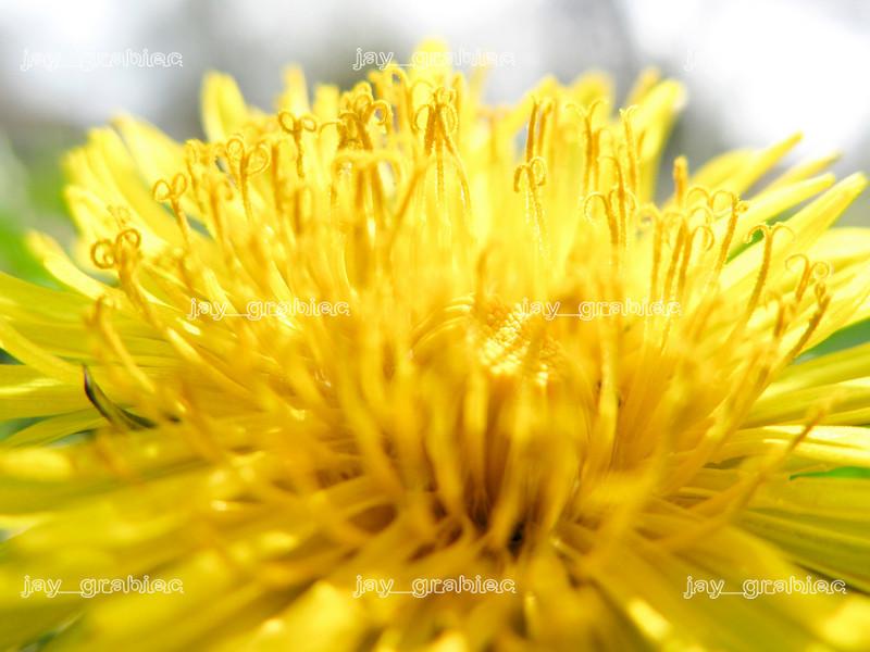 20100407_Flowers04.JPG