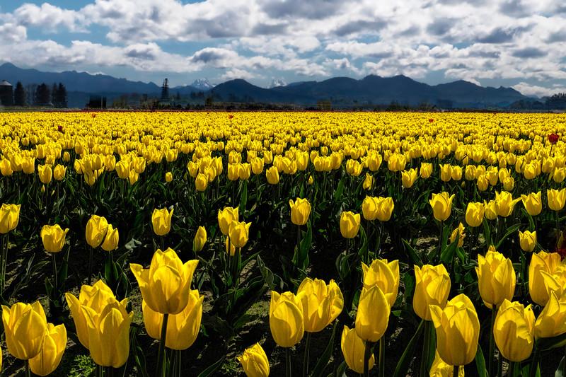 Endless Fields of Beauty