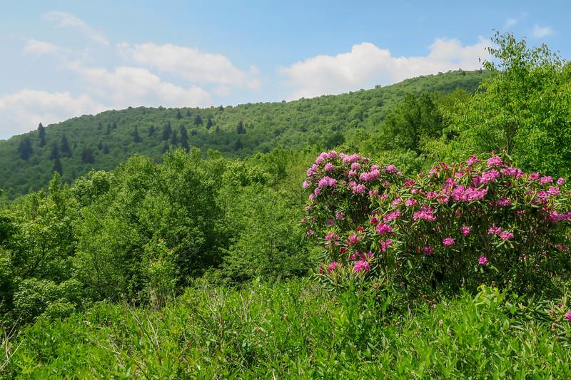 Graveyard Ridge Trail -- 5,570'