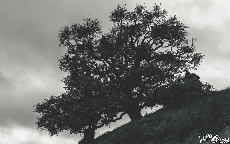 NewZealand_217.jpg