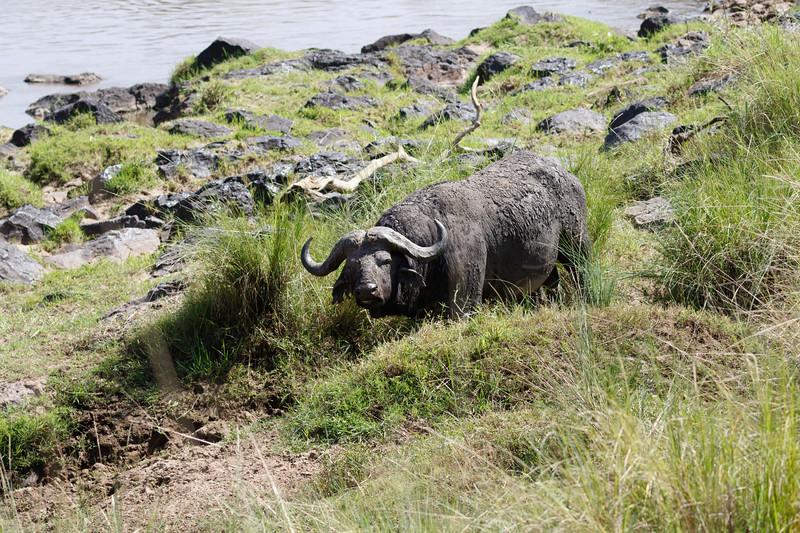 Kenya 2015-03690.jpg