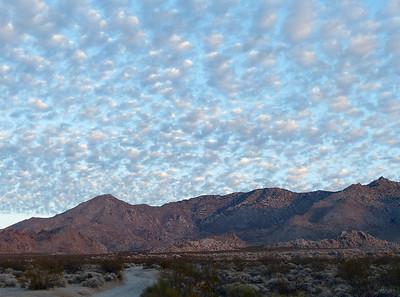 Mojave Van 2020