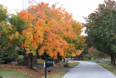 Fall Foliage in and around Columbia Maryland