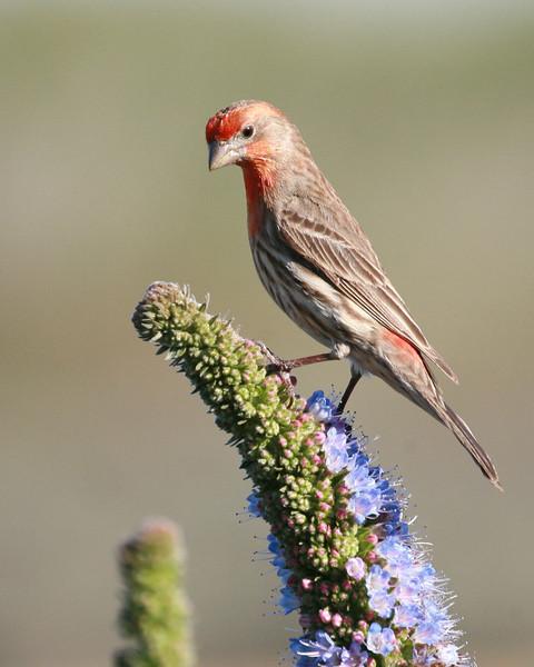 bird  10119.jpg