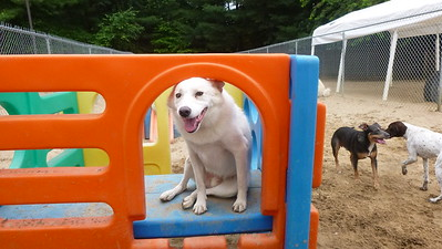 All Dogs Gym 7-14-2015