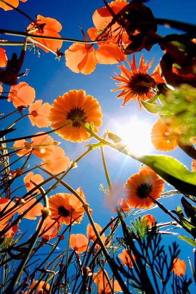 Blumen von Unten