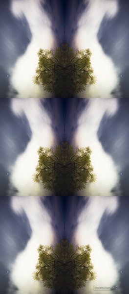 TulipskyFinal.jpg