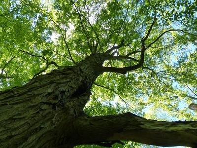 20130525 Peter's Woods