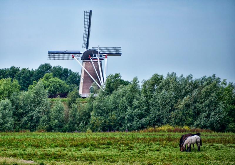 Rhine Windmills01.jpg