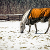 Snow Grazing 3