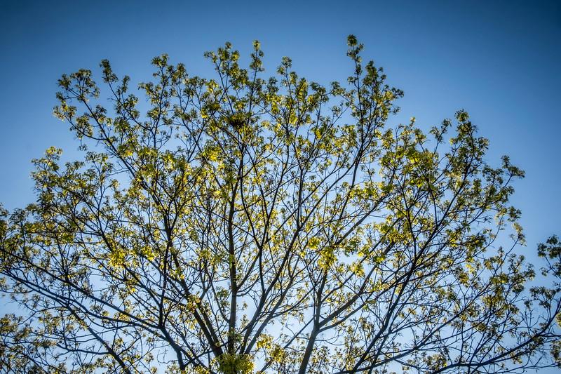stromy spring-002.jpg