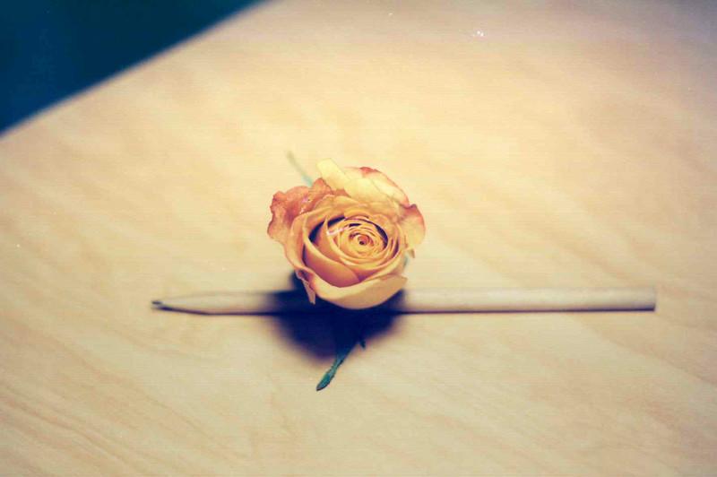 Rose 01.jpg