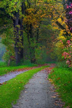 Fine Art natuur foto van een wandelpad in de herfst met vallende bladeren en bomen gehuld in herfstkleuren.