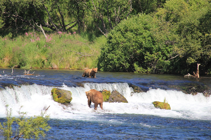 20160713-205 - Katmai NP-Brooks Camp-Two Bears at Brooks Falls.JPG