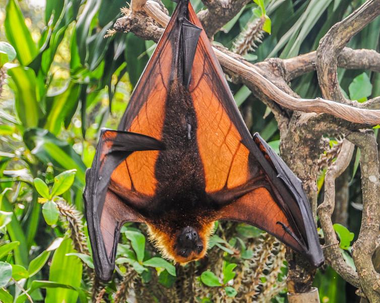 Bali Bats-3.jpg