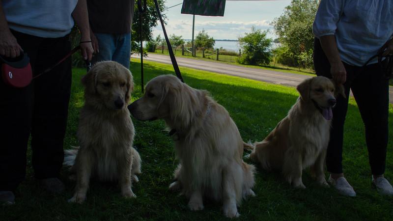 PuppyParty18-597.jpg