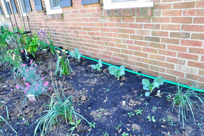 garden-0024.jpg