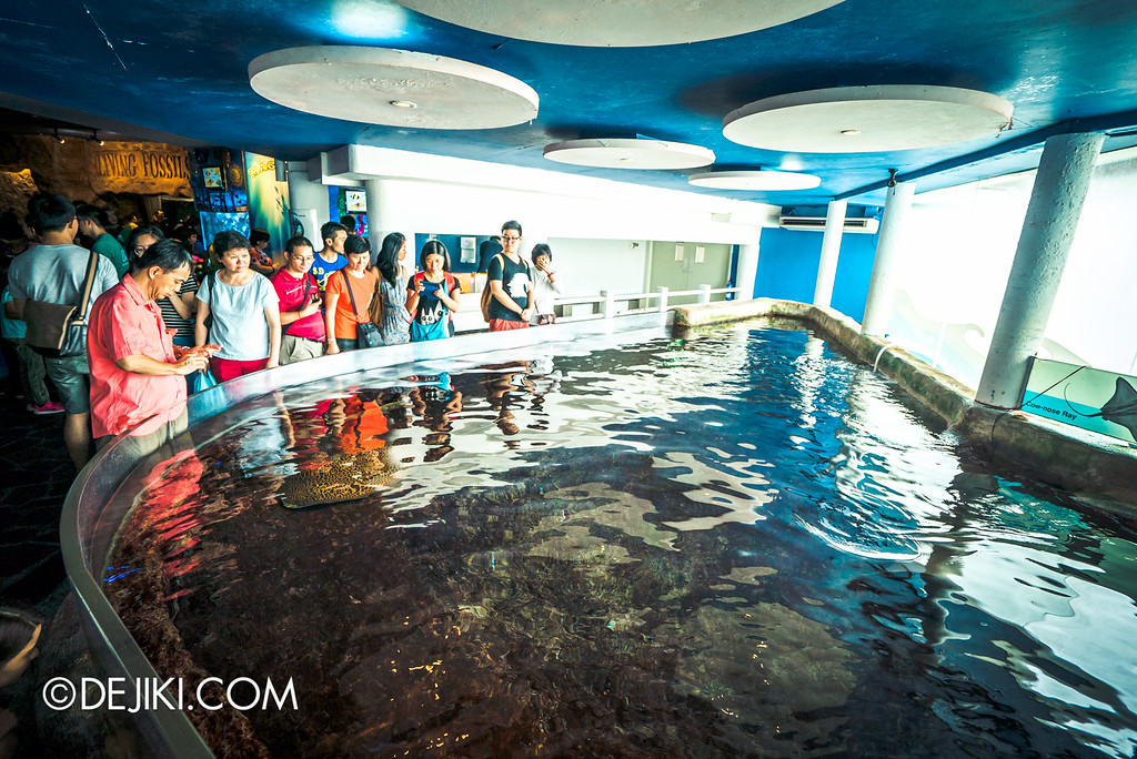 Underwater World Singapore - Ray of Fun full view