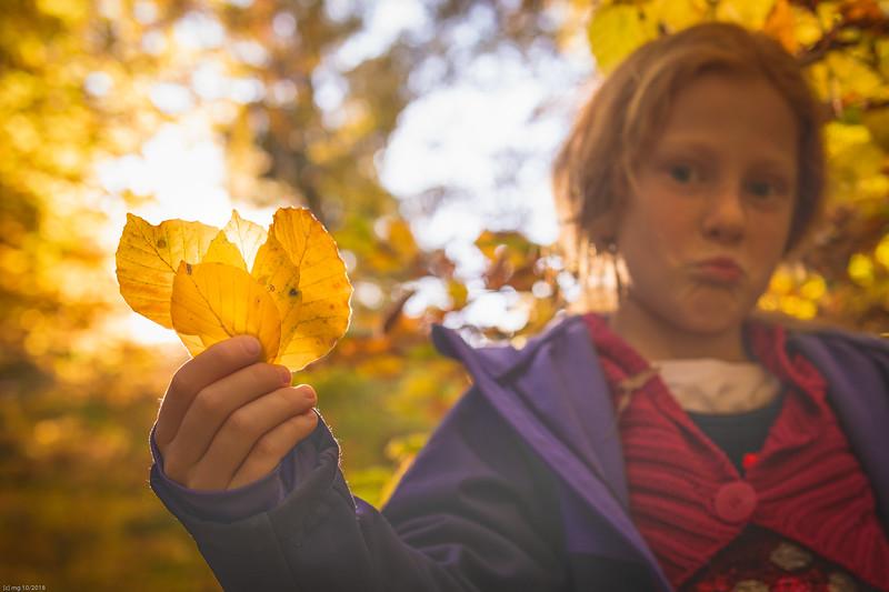 Herbstblätter / autumn leaves