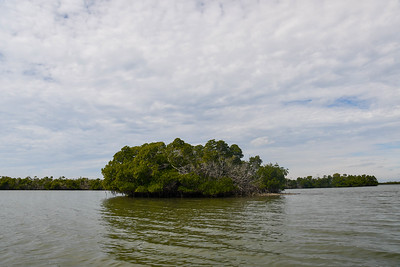 1230PM Mangrove Tunnel Kayak Tour - Stephenson, French & Penney
