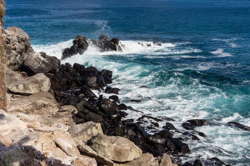 Coast of Santa Fé Island