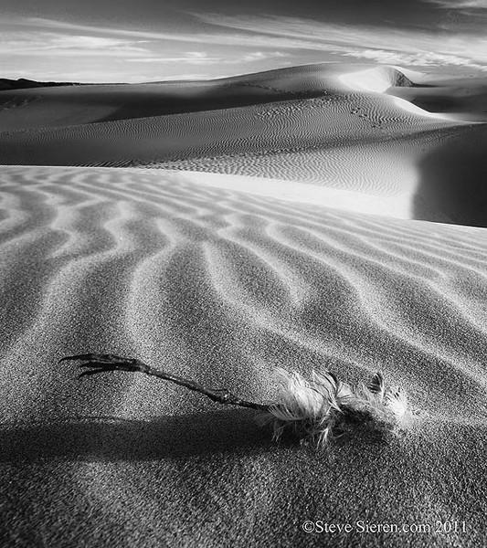 Oceano_Dunes_Dead_Bird b BW.jpg
