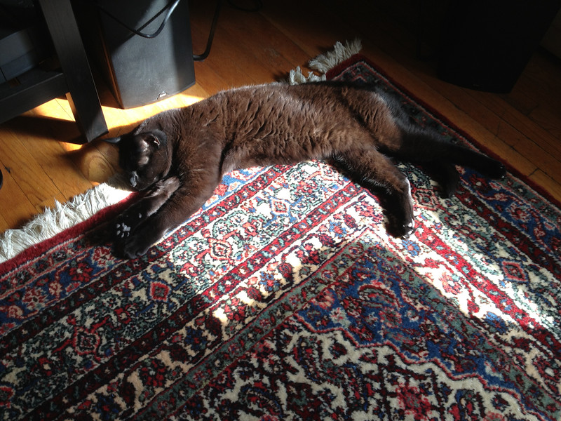 Cats are solar powered...
