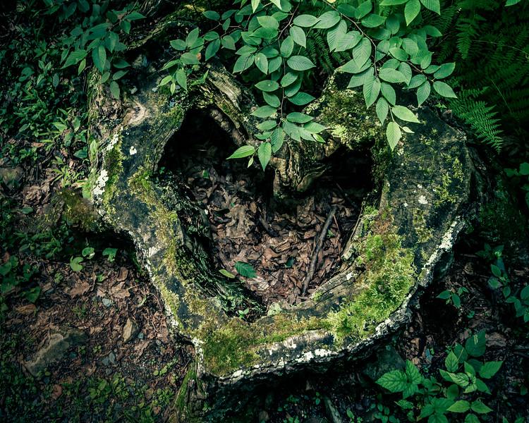 Green Heart-.jpg