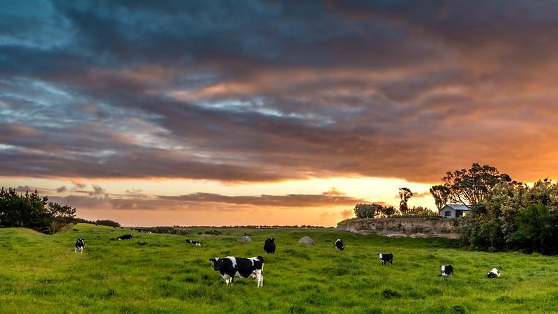New Zealand_038.jpg
