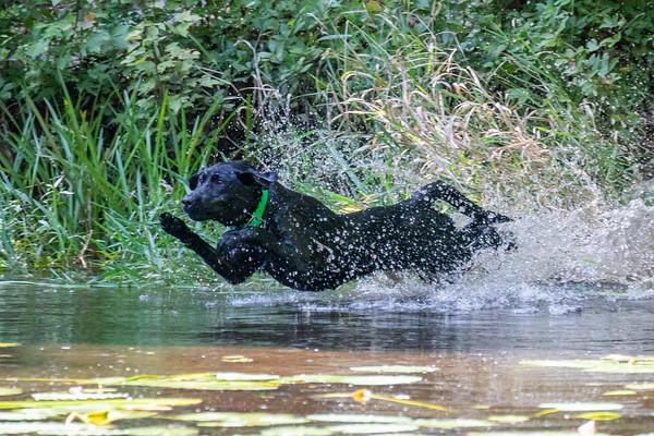 Pond Training - September 2021