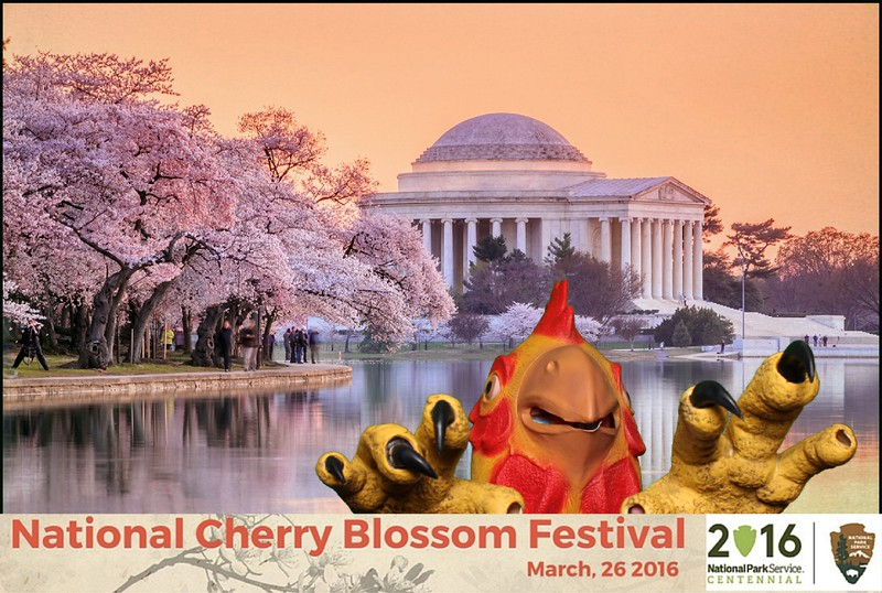 Boothie-NPS-CherryBlossom- (401).jpg