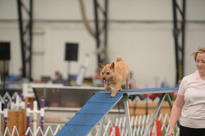 Montgomery All Terrier Cluster AKC Agility Trial