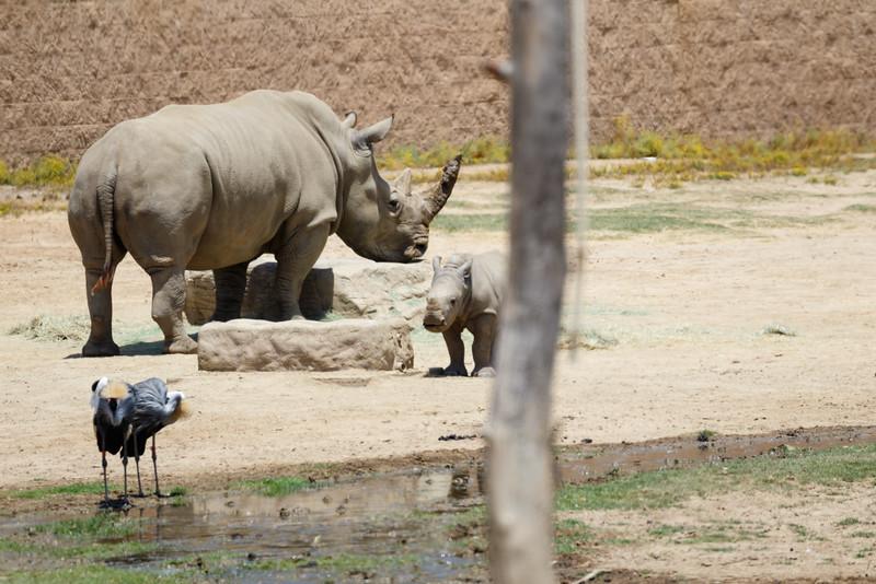 2016.06.01 Safari Park 0090.jpg