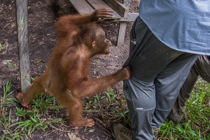 Borneo-2254.jpg