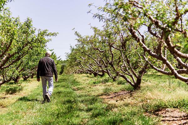 Kingsbury Orchard