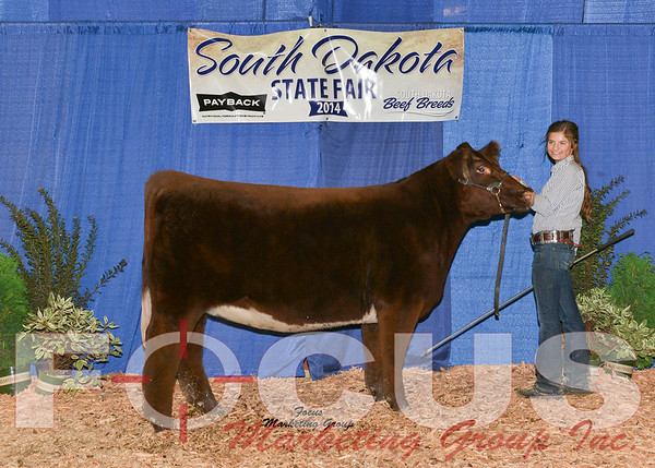Shorthorn / Shorthorn Plus Shows