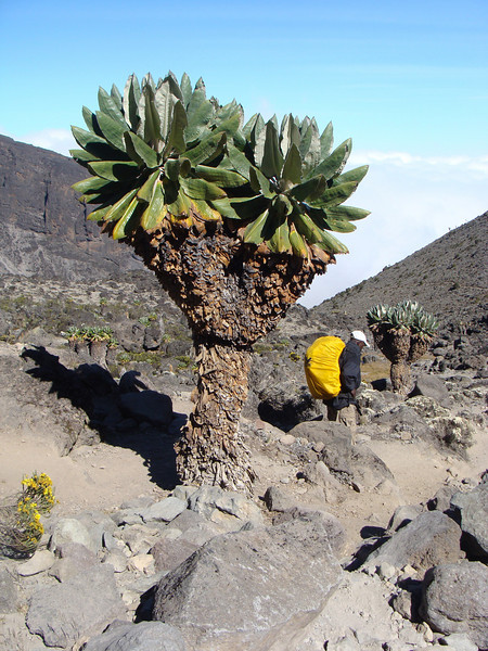Going down to Barranco Camp - 7.5 hrs