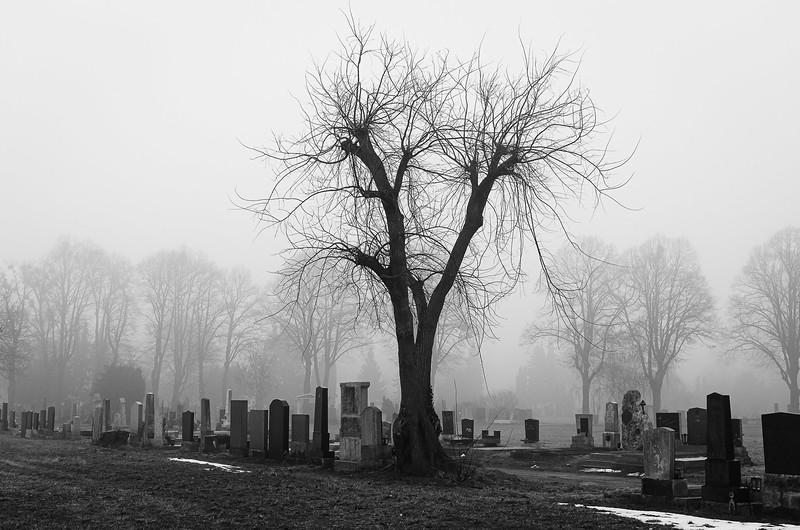 20110108_091428_zentralfriedhof_2280.jpg