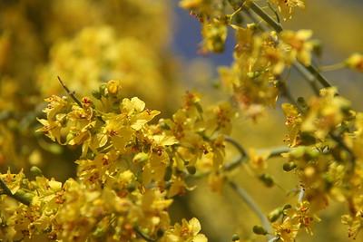 Flowers in Bloom - APR2013