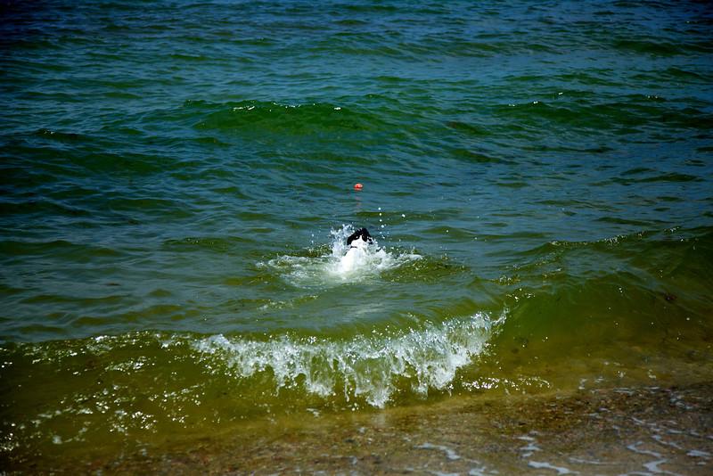 Cape Cod 2011 65.jpg